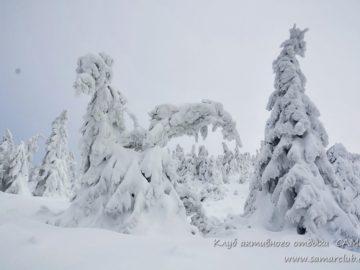 Деревья покрытые снегом