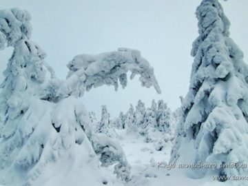 Снег на елях