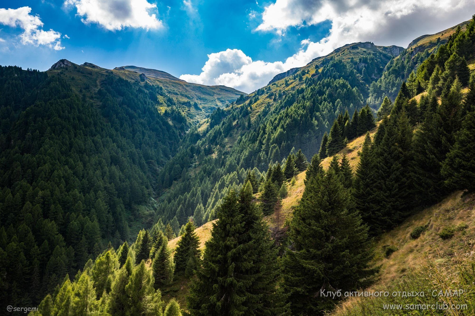 Деревья на склонах