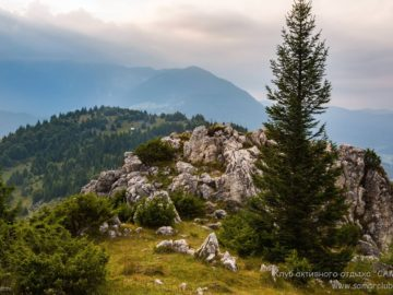 Деревяь в горах