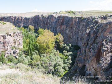 Деревья в каньоне