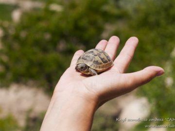 Маленькая черепашка