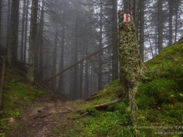 Метки на деревьях