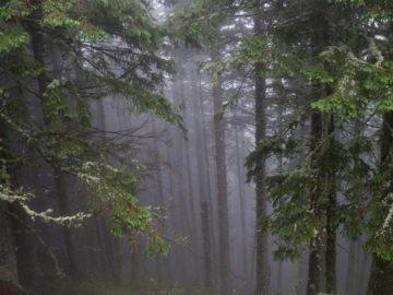 Сосновый лес на склоне