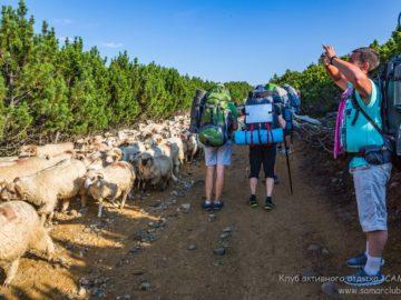 Встретили стадо овец на тропе