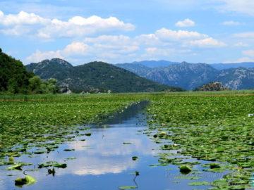 Скадарское озеро в лилях