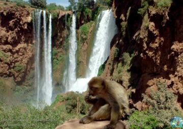 Водопад Узуд и обезьянка