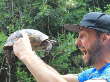 Черепаха в руках