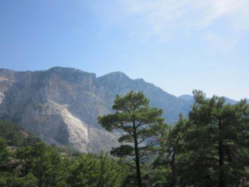 Деревья в горах