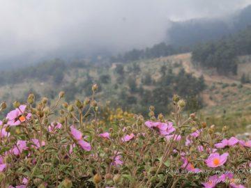 Фиолетовые цветы на поляне