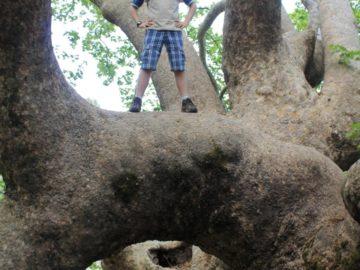 Ислледуем дерево