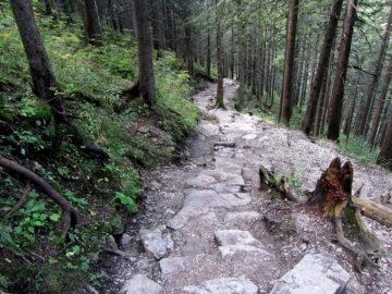 Каменная тропа в лесу