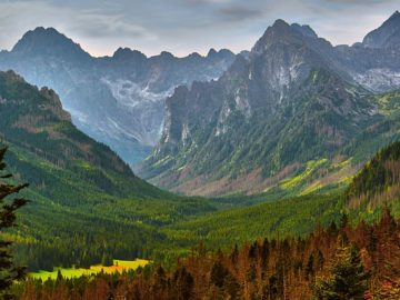 Лес меж гор