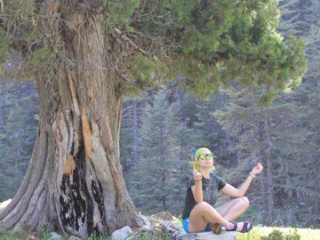 Медитация под деревом