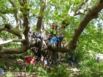 На большом дереве