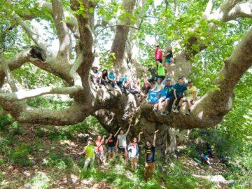 На величественном дереве