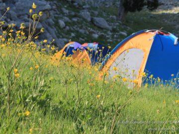 Палатки в траве