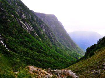 Растительность на склоне горы