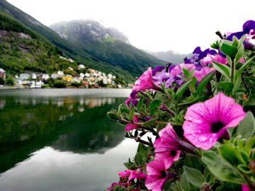 Цвет на берегу реки
