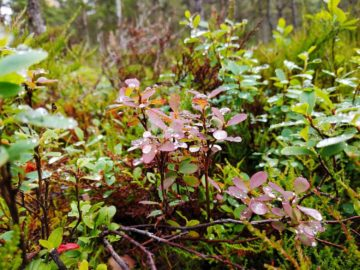 Цветы после дождя