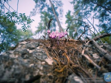 Цветы в хвое