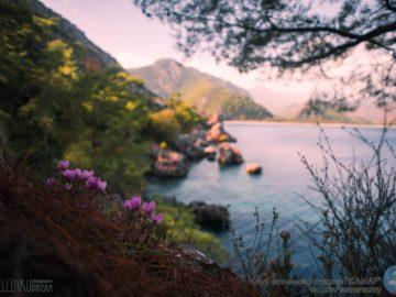Цветы возле моря
