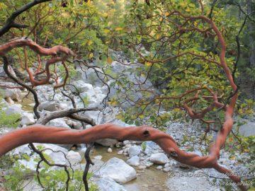 Вьющиеся деревья