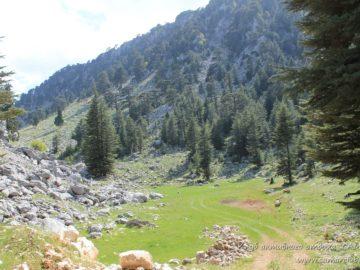 Зеленая поляна в горах