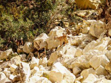 Козлы на камнях