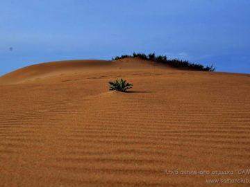 Кусты в песке