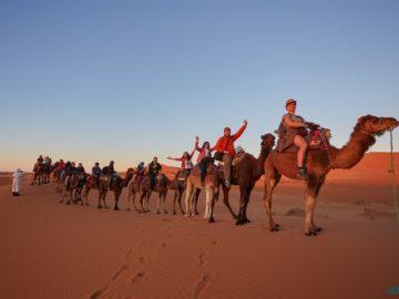 Общее на верблюдах