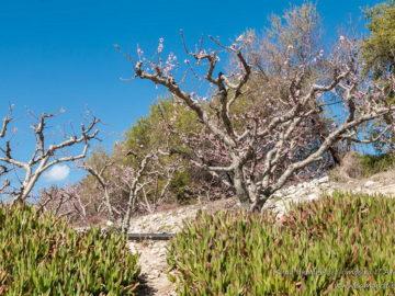 Распускающиеся деревья