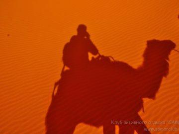 Тень верблюда