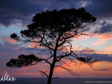 Дерево на ночном пляже