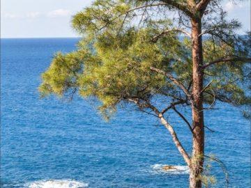 Дерево над морем
