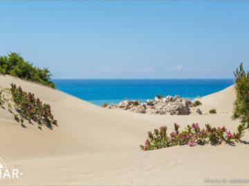 Кустарники на пляже