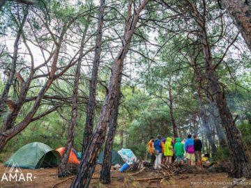 Лагерь в сосновом лесу