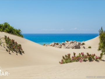 Растительность на пляже