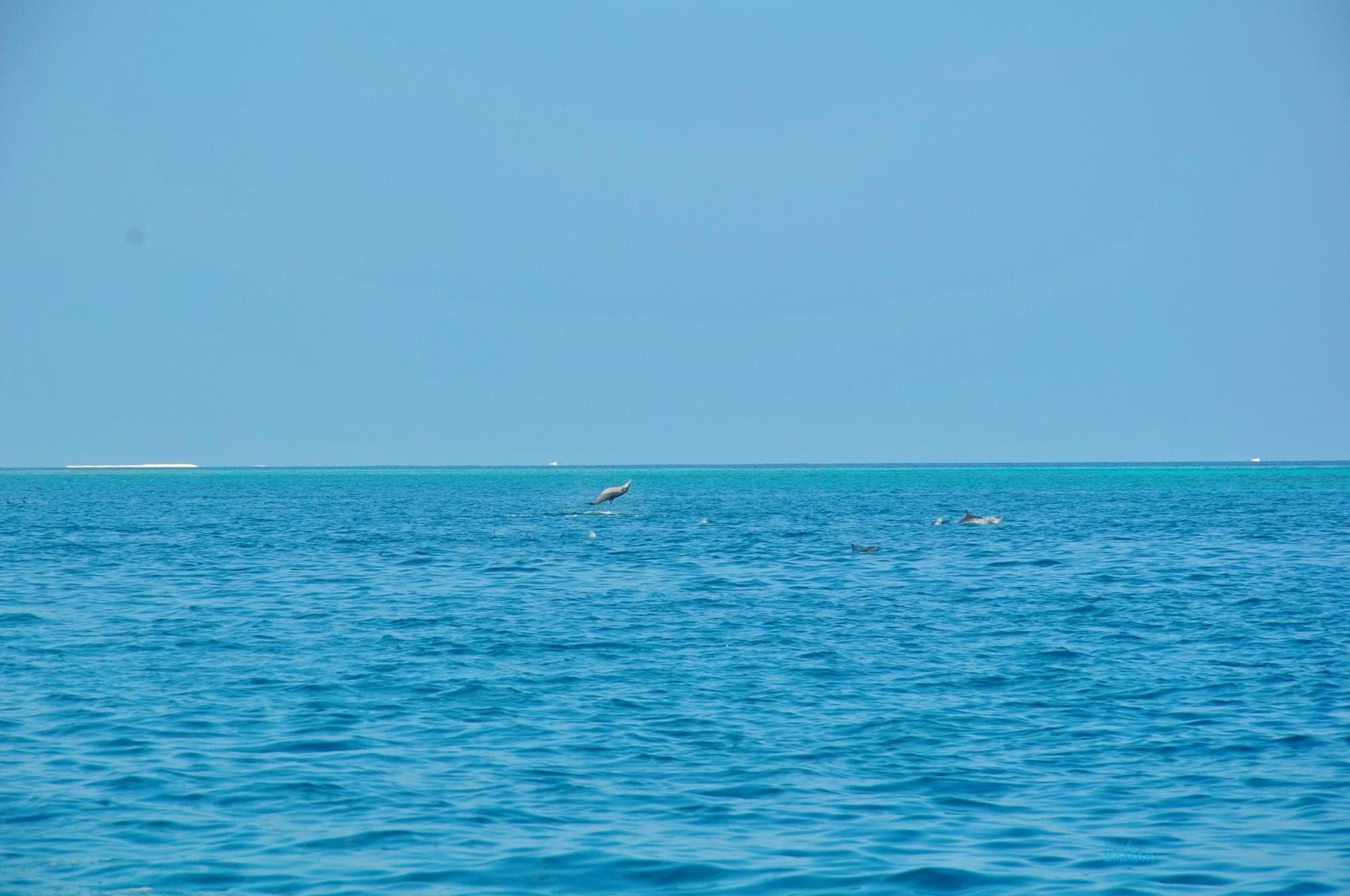 Дельфины пригыют из воды