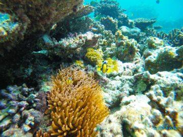 Разноцветная рыбка в рифах