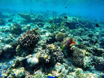Рифы под водой