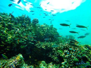 Рыбы на рифах