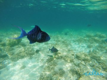 Рыбы в прозрачной воде