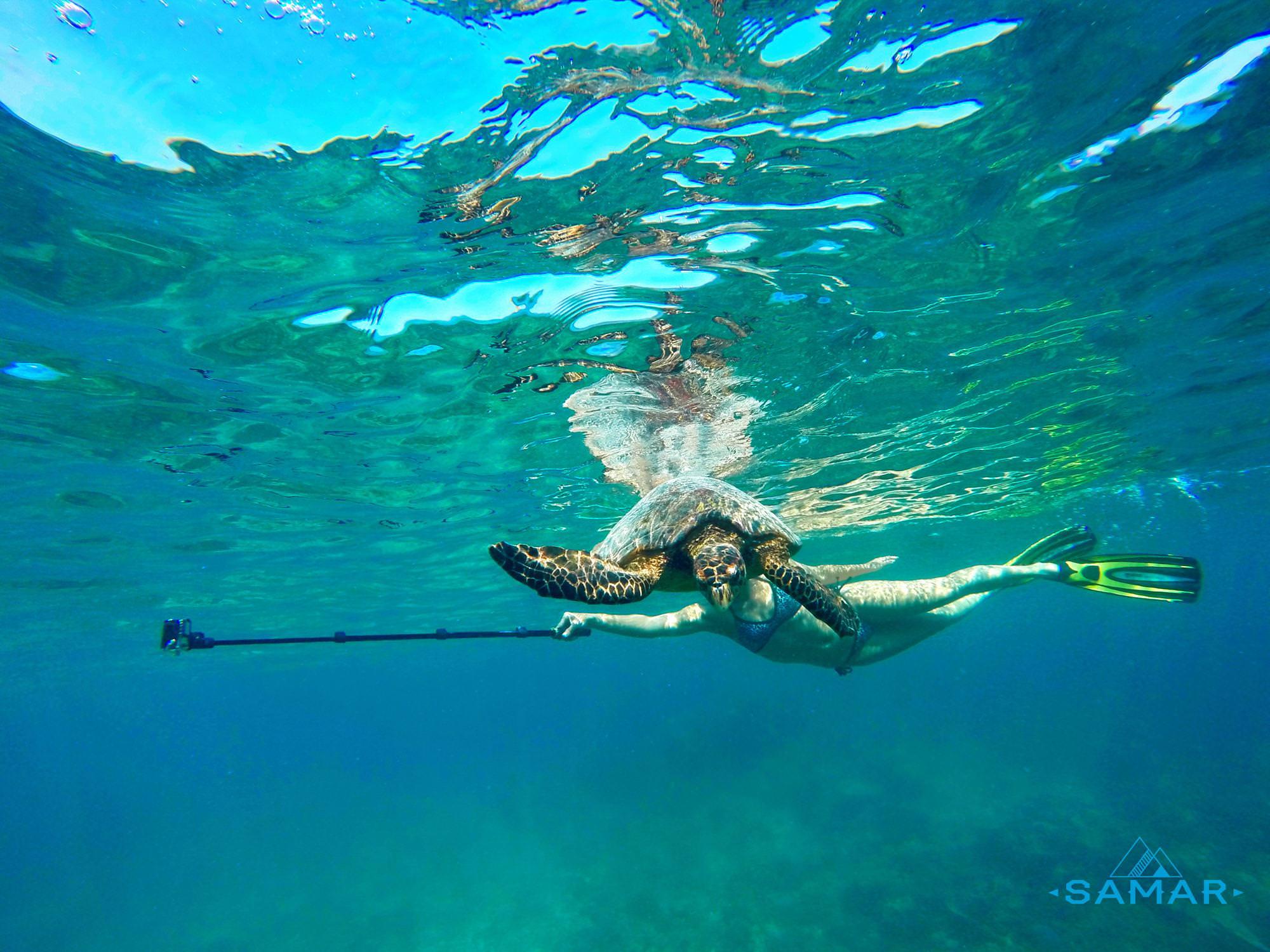 Встретили черепаху в воде