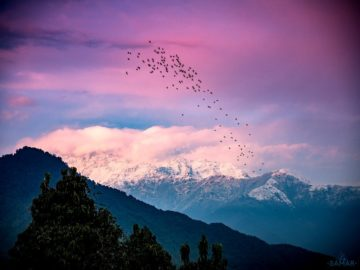 Птицы над горами
