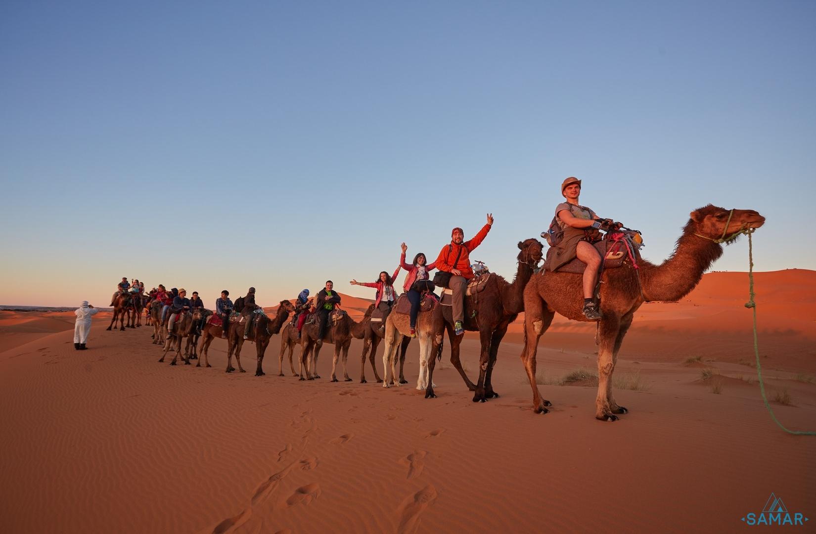 верблюды Сахара