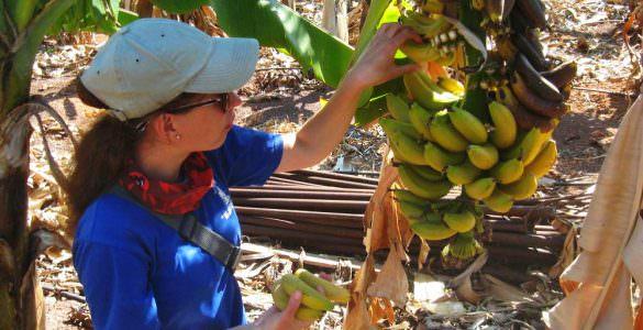 бананы на Кипре